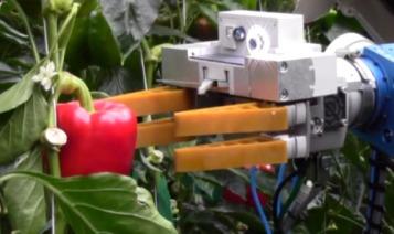 roboticsvegetables.jpg